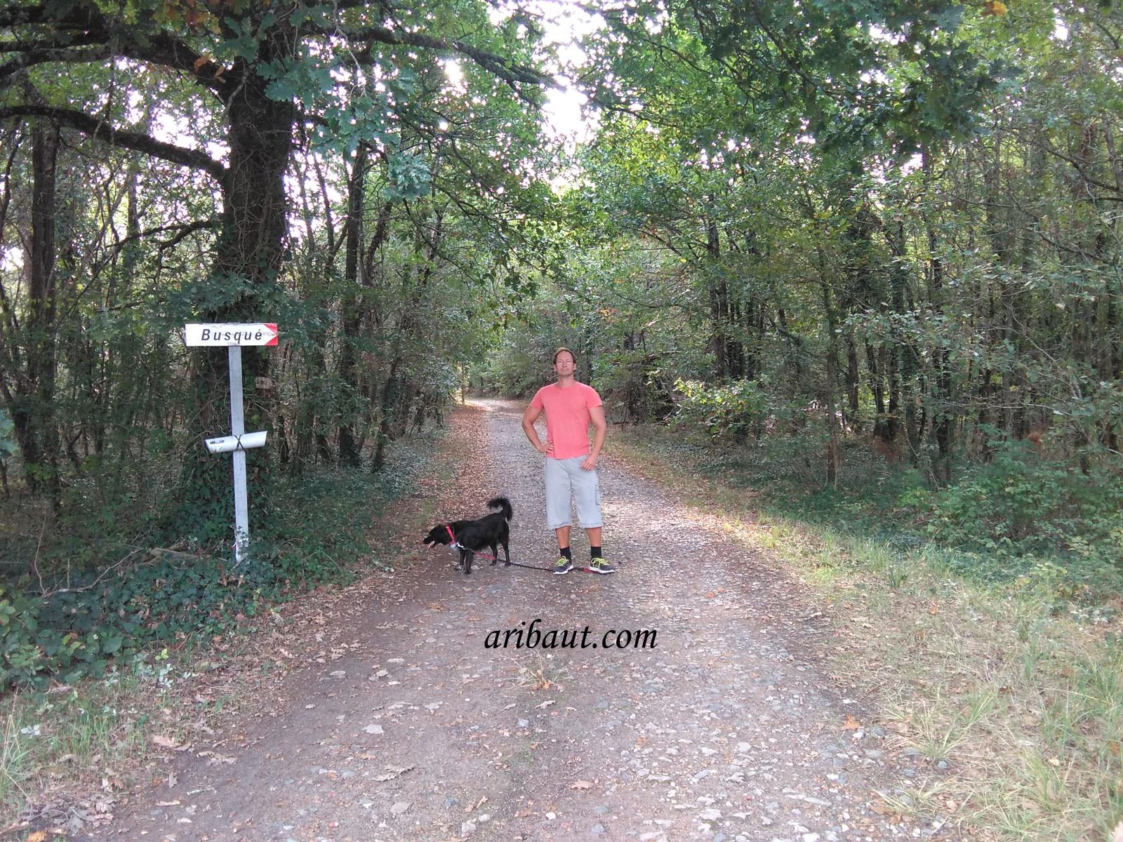 pierre-aribaut-zetrader-france-rion-des-landes-region-dax-landes-18-octobre-2018-foret-bois.jpg